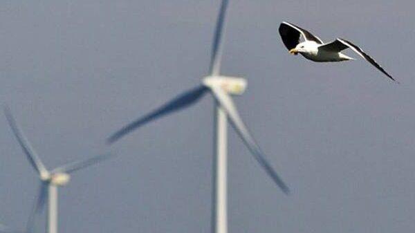 Impact van windturbines op vogelpopulaties